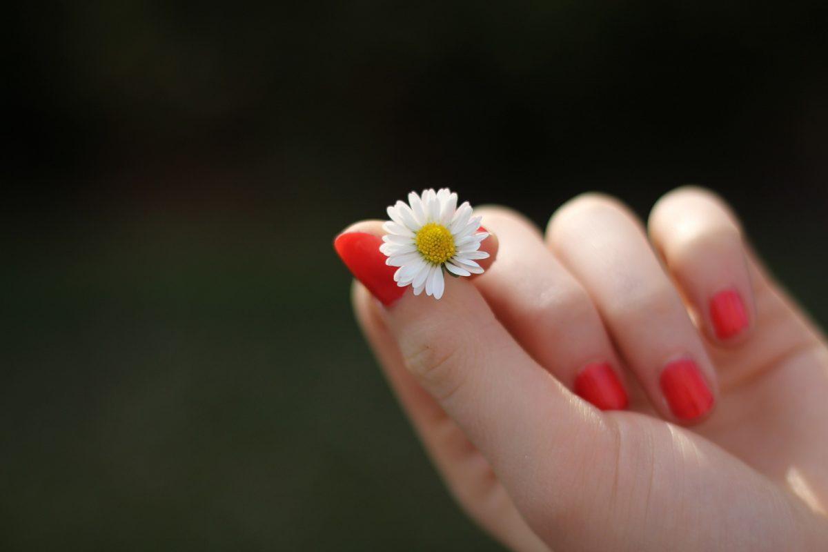 花を持っている手